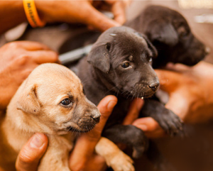 Two puppies wait to get their rabies vaccinations.